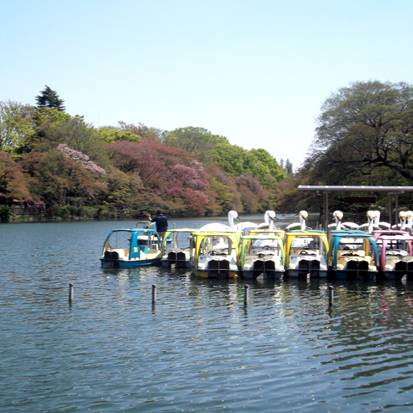 The lake in Inokashira Park, Kichijoji